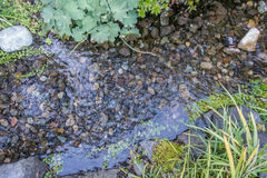 Rocky Stream Bed Stock Images