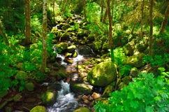 """Rocky Stream Of Elk Creek en bosque del Estado de Siskiyou del € de Rogue Riverâ """", Oregon fotografía de archivo"""