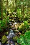 """Rocky Stream Of Elk Creek en bosque del Estado de Siskiyou del € de Rogue Riverâ """", Oregon imágenes de archivo libres de regalías"""