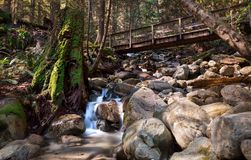 A rocky stream in an evergreen forest. stock image