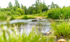 Rocky stream flows through a forest clearing with a blurred background stock photos