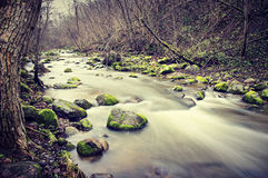 Rocky stream. A rocky stream in a forest, long exposure Stock Photography