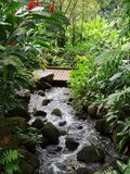 Rocky Stream Through Lush Tropical-het Plaatsen stock foto's