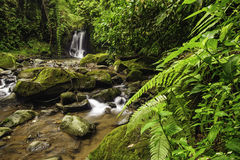 Rocky Stream. Rocky mountain stream in a Costa Rica rainforest Stock Photography