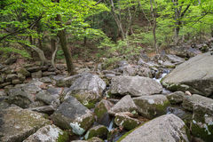 Rocky stream next to the Beomeosa Temple in Busan Stock Photography