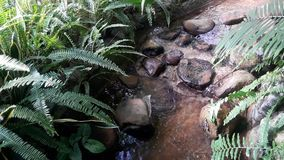 A rocky stream surrounded by vegetation. A stream of clear water running through stones in the midst of vegetation stock footage