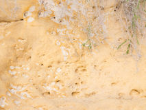 Rocky surface and drought-resistant plant Royalty Free Stock Photos
