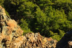 Rocky surface of hills in pine forest near Kemer, Turkey, view f Stock Photo