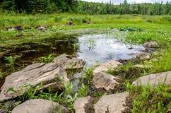 Rocky Swamp Imagenes de archivo