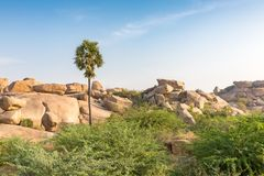 Rocky terrain with palm, Hampi, Karnataka, India. Asia stock images