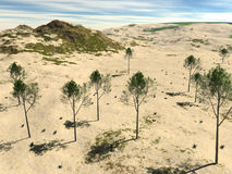 The rocky terrain with sand and trees Royalty Free Stock Photo