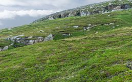 Rocky terrain and vegetation on the island of Mageroya, Norway Royalty Free Stock Photography