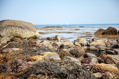Tide pools on New Hampshire coast. Rocky tide pools filled with seaweed on the coast of New Hampshire, USA at low tide stock photos