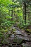 Rocky Trail Stockfoto