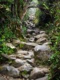 Rocky Trail beim Kinabalu in Sabah, Malaysia Lizenzfreie Stockfotografie