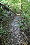 Rocky Trail boscoso in Pensilvania immagine stock libera da diritti