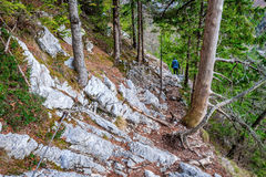Rocky trail with cable through forest Stock Photo