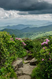 Rocky Trail Through Catawba Rhododendron royalty free stock images