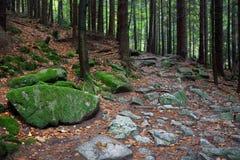 Rocky Trail dans la forêt de montagne Images stock