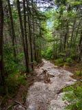 Rocky Trail Through Dense Woods exposé photo libre de droits