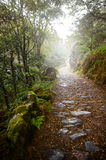 Rocky trail in the foggy forest royalty free stock image