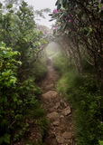Rocky Trail through Foggy Rhododendron Bushes Stock Photography