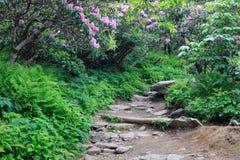 Rocky Trail North Carolina Mountains stock photography