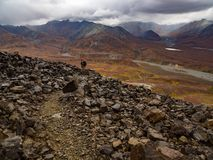 Rocky Trail, Alaskan Mountain Vista in Autumn, Denali National Park royalty free stock photography
