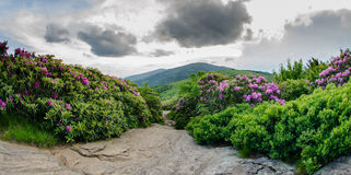 Rocky Trail through rhododendron garden.dng Royalty Free Stock Photo