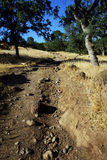 Rocky Trail on a Sunny Day. A rocky trail leading up a mountain on a hot, sunny day Stock Images