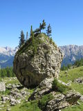 Rocky trees. In the Italian Dolomites Royalty Free Stock Photography