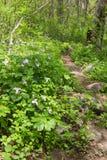 Rocky Trillium Trail Virginia Royalty Free Stock Photo