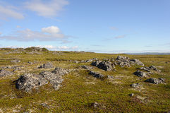 Rocky tundra landscape in summer Royalty Free Stock Image