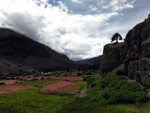Rocky Valley Himalayan que ofrece campos rosados del alforfón Fotos de archivo libres de regalías