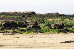 Rocky vegetation. Narrow look at the rocky beach covered with vegetation stock photo