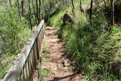 Rocky Walkway Karri Forest West Australia Royalty Free Stock Image