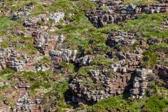 Rocky Wall. Detail of a rocky wall specific for the Brittany coastline in North of France Royalty Free Stock Image