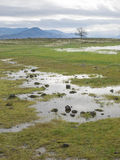 Rocky wetlands Royalty Free Stock Photography