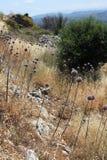 Rocky Wilderness View Immagine Stock Libera da Diritti