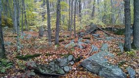 Rocky Woodlands Royaltyfri Foto