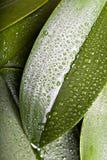 Rocío de la mañana Foto de archivo