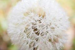 Rocío de la mañana Fotografía de archivo libre de regalías