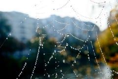 Rocío de la mañana del web de araña Fotografía de archivo