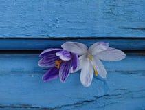 Rocuse malva e branco do  de Ñ em um fundo azul Foto de Stock