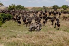 Roczna migracja na Masai Mara, Kenja, Afryka zdjęcia stock