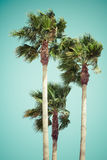 Roczników drzewka palmowe przy tropikalnym wybrzeżem Fotografia Stock