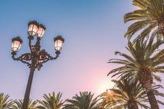 Roczników drzewka palmowe w eveing świetle słonecznym i Obrazy Stock