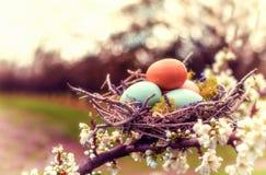 Roczników jajka Fotografia Royalty Free