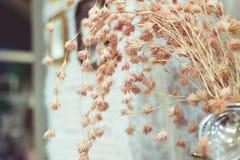 Roczników kwiatów kolor Zdjęcie Stock