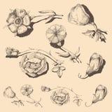 Roczników kwiaty Obraz Stock